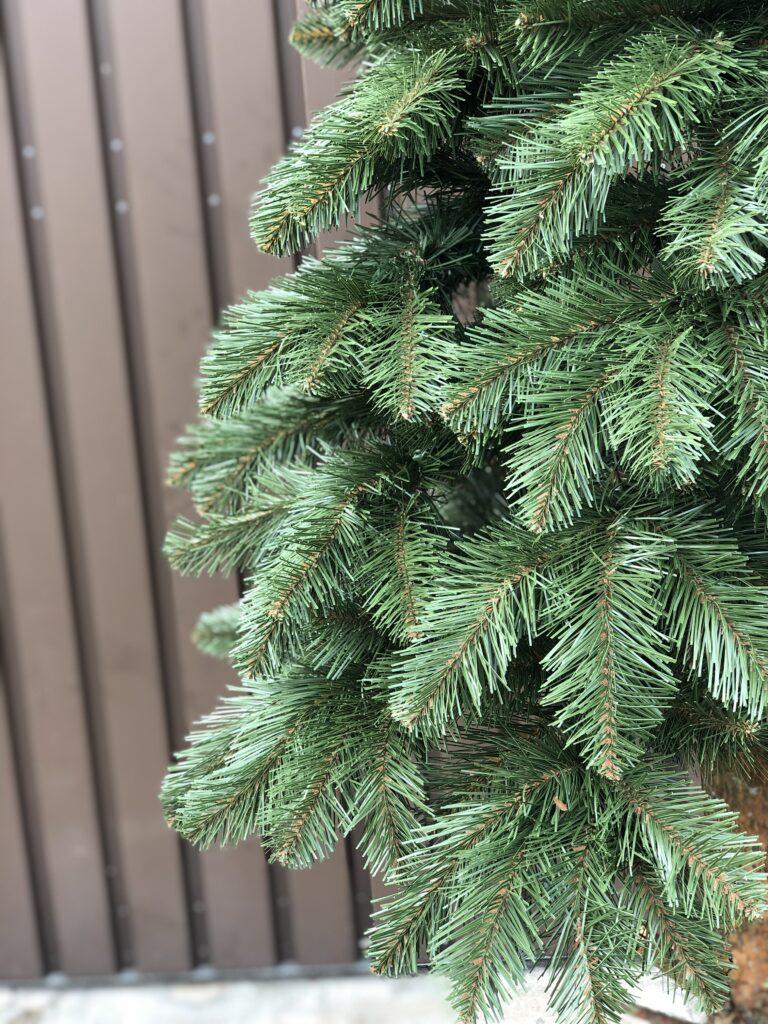 zbliżenie na sosna zielona na pniu